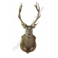 Голова оленя на медальоне