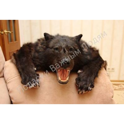 Ковер из шкуры черного Канадского волка