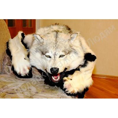 Шкура белого канадского волка
