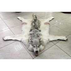 Ковер из шкуры сибирского волка