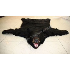 Шкура черного американского медведя